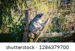 a close up photo of a beautiful ... | Shutterstock . vector #1286379700