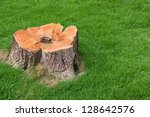 Stump Tree Plant On Green Field ...