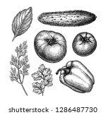 Vegetables Set. Ink Sketch...