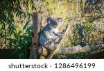 a close up photo of a beautiful ... | Shutterstock . vector #1286496199