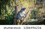 a close up photo of a beautiful ... | Shutterstock . vector #1286496226