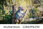 a close up photo of a beautiful ... | Shutterstock . vector #1286496250