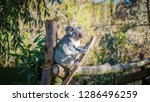a close up photo of a beautiful ... | Shutterstock . vector #1286496259