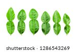 bergamot leaf top view isolated ...   Shutterstock . vector #1286543269