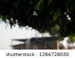 blurred images of spider webs...   Shutterstock . vector #1286728030