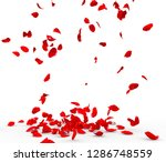 Stock photo many rose petals fall on the floor isolated on white background 1286748559