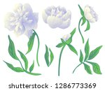 vector white peony floral... | Shutterstock .eps vector #1286773369