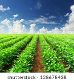 rows on the field. agricultural ... | Shutterstock . vector #128678438