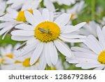 shiny green false blister...   Shutterstock . vector #1286792866