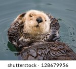 Otter With Personality Posing...