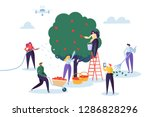 farmer pick apple harvest to... | Shutterstock .eps vector #1286828296