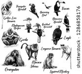 Big set of hand drawn sketch style primates and exotic birds isolated on white background. Vector illustration.