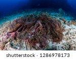 an abandoned ghost fishing net...   Shutterstock . vector #1286978173