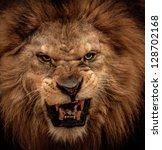 Stock photo close up shot of roaring lion 128702168