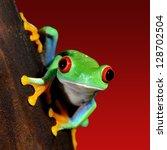 red eye tree frog agalychnis... | Shutterstock . vector #128702504