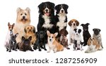 group of dogs isolated on white ... | Shutterstock . vector #1287256909