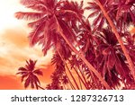 tropical coconut palm trees on... | Shutterstock . vector #1287326713