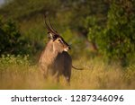 side view of isolated waterbuck ... | Shutterstock . vector #1287346096