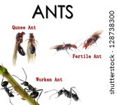 animal set, collage of ants in English in front of white background - stock photo