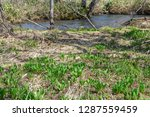 the forest floor in spring   Shutterstock . vector #1287559459