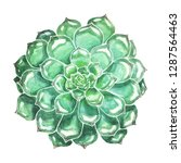 blue green succulent watercolor ... | Shutterstock . vector #1287564463
