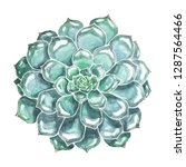 succulent watercolor... | Shutterstock . vector #1287564466