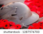 Remembrance Day Photo Of The...