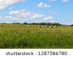 view of hay bales in a field... | Shutterstock . vector #1287586780