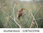 a female yellow headed... | Shutterstock . vector #1287622546