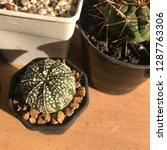 cactus with sunlight   Shutterstock . vector #1287763306