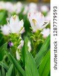 flowers in nature.   Shutterstock . vector #1287779593