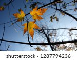 golden autumn leaves over a... | Shutterstock . vector #1287794236