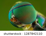 The Extreme Close Up Of Flies...