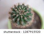 houseplant cactus in a green...   Shutterstock . vector #1287915520