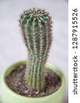 houseplant cactus in a green...   Shutterstock . vector #1287915526