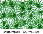 green leaves  palm plant with a ... | Shutterstock . vector #1287963226