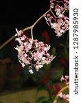 flowers of beauty   Shutterstock . vector #1287985930