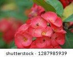 flowers of beauty   Shutterstock . vector #1287985939