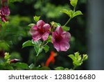 flowers and plant   Shutterstock . vector #1288016680