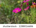 flowers and plant   Shutterstock . vector #1288016686