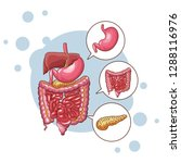 digestive system parts | Shutterstock .eps vector #1288116976