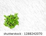 kitchen herbs. basil plant...   Shutterstock . vector #1288242070