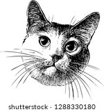 vector sketch of the head of a... | Shutterstock .eps vector #1288330180