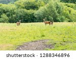 deer family in the nature | Shutterstock . vector #1288346896