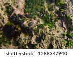 shallow seabed in bali indonesia | Shutterstock . vector #1288347940