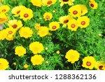 flower nature garden   Shutterstock . vector #1288362136