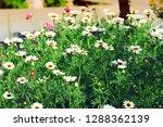 flower nature garden   Shutterstock . vector #1288362139