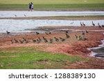 family of ducks | Shutterstock . vector #1288389130