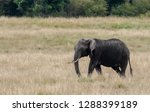 an elephant walking across the... | Shutterstock . vector #1288399189
