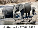 elephants on the chobe river    ... | Shutterstock . vector #1288412329